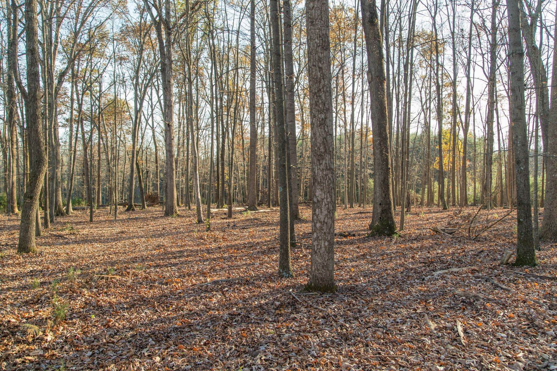 18. Land for Sale at 0 Stony Point Pass Keswick, Virginia 22947 United States