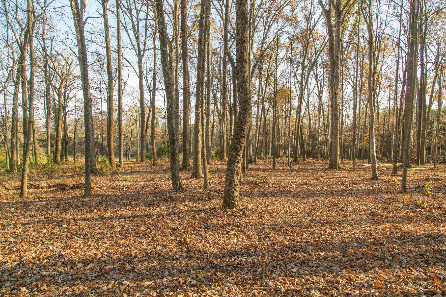 19. Land for Sale at 0 Stony Point Pass Keswick, Virginia 22947 United States