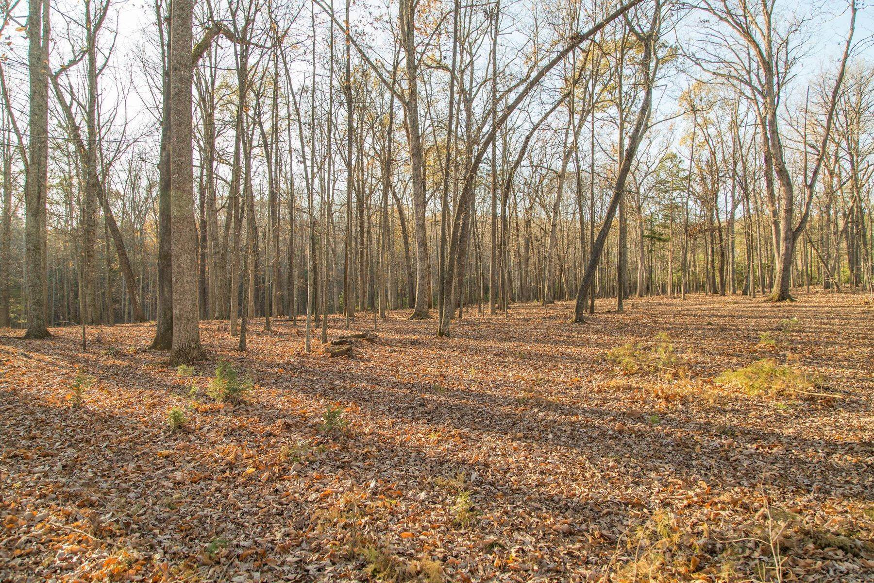 16. Land for Sale at 0 Stony Point Pass Keswick, Virginia 22947 United States